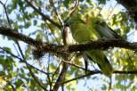 Ibirapuera-birdwatching-abr16_09