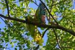 Ibirapuera-birdwatching-abr16_14