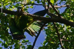 Ibirapuera-birdwatching-abr16_15