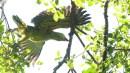 Ibirapuera-birdwatching-abr16_24