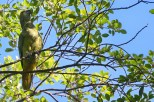 Ibirapuera-birdwatching-abr16_25