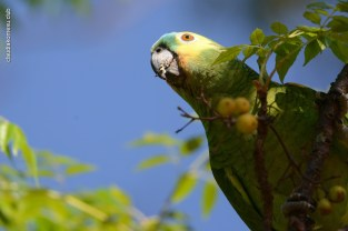 Ibirapuera-birdwatching-abr16_28