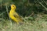 Ibirapuera-birdwatching-abr16_32