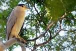 Ibirapuera-birdwatching-abr16_36