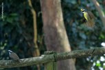 Ibirapuera-birdwatching-abr16_38
