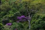 natureza_Minas-Gerais_15