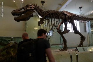 American-Museum-of-Natural-History_15