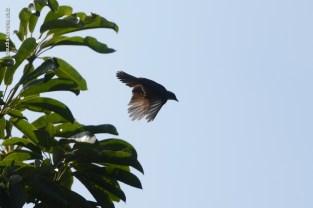 parque-do-ibirapuera_aves_43