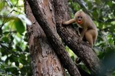 macaco-prego-galego_100