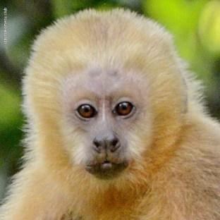 macaco-prego-galego_closes_100