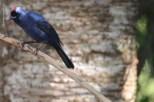 aves_campos-do-jordao_12