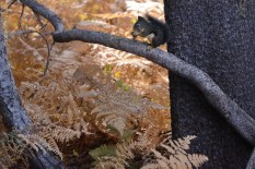 yosemite-outono_12