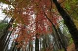 yosemite-outono_19