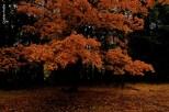 yosemite-outono_21