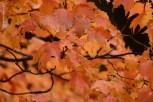 yosemite-outono_22