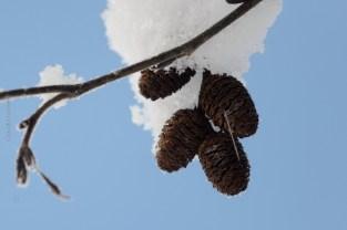 natureza-neve_20