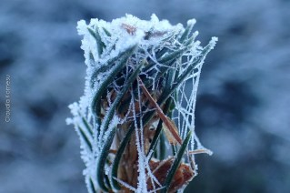 natureza-neve_29