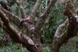 cerejeiras_15