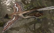 microraptor_1