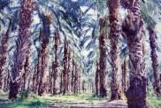 Plantation de dattiers