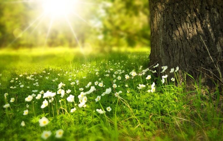 spring-276014_1280