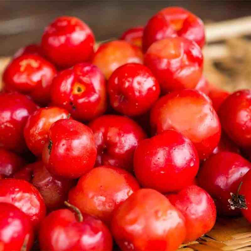 Acerola kryddereddik - Økologisk