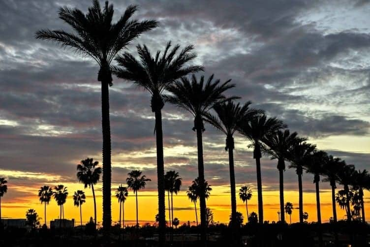 Anaheim palm trees at sunset