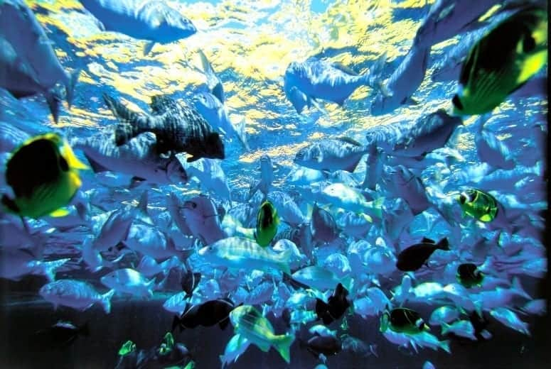 Ocean Fish of Maui (Credit: Hawaii Tourism Authority, Kirk Lee Aeder)