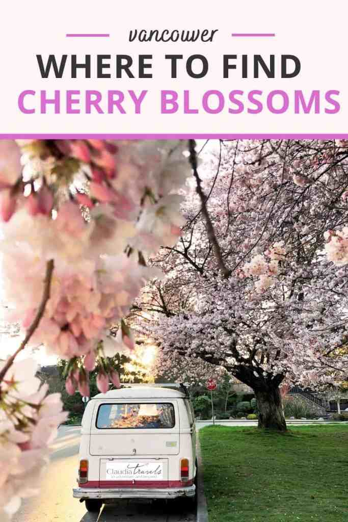 van with cherry blossoms pin