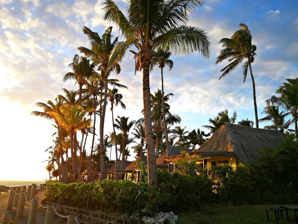 palm trees in sunset in fiji