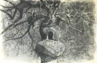 arbre-au-canard-40x60