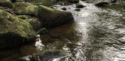 Sophro-Balade Aux Gorges du Stangala à Quimper