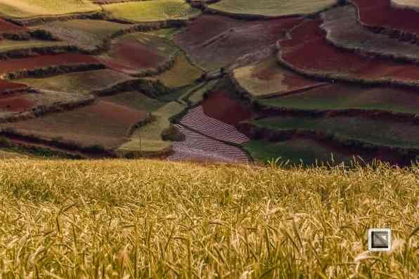 China - Yunnan - Dongchuan-23