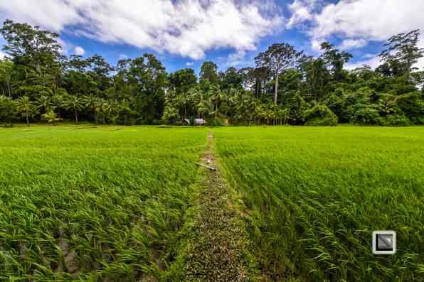 India - Andaman Islands - Havelock-16