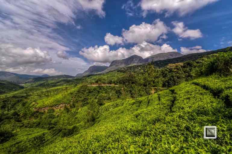 India - Kerala - Munnar-11
