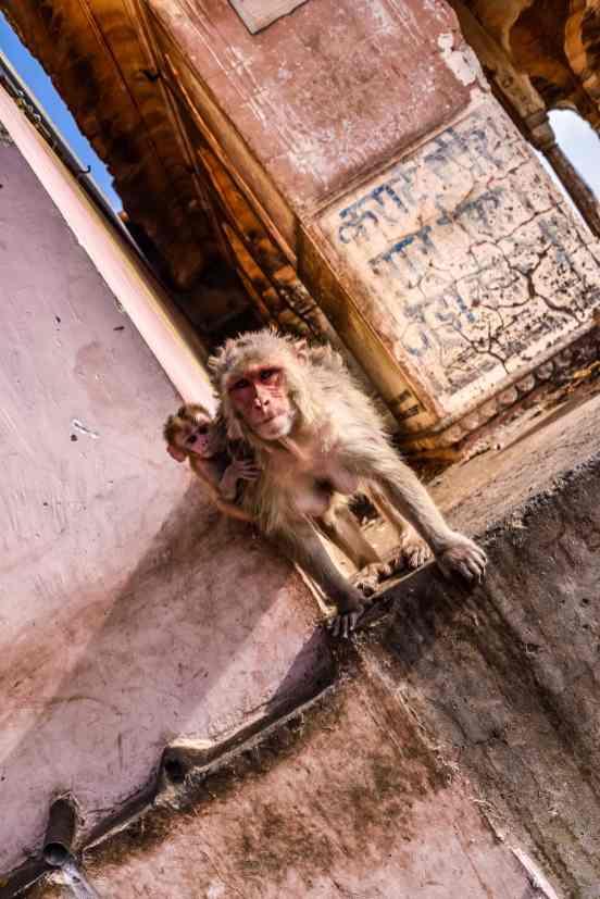 India - Rajasthan - Jaipur-23
