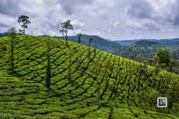 India - Tamil Nadu - Valparai-4