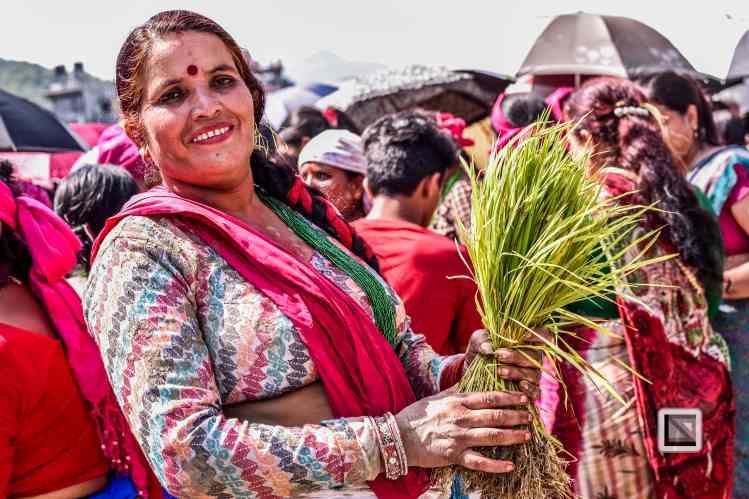 Pokhara paddy planting festival-83