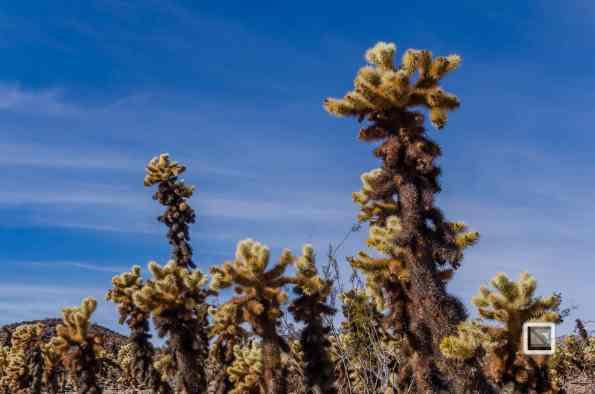USA - California - Joshua national park-17