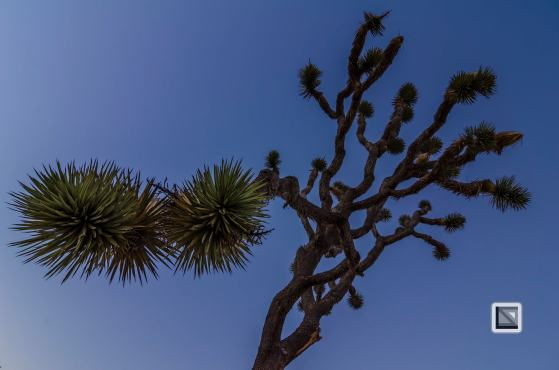 USA - California - Joshua national park-6