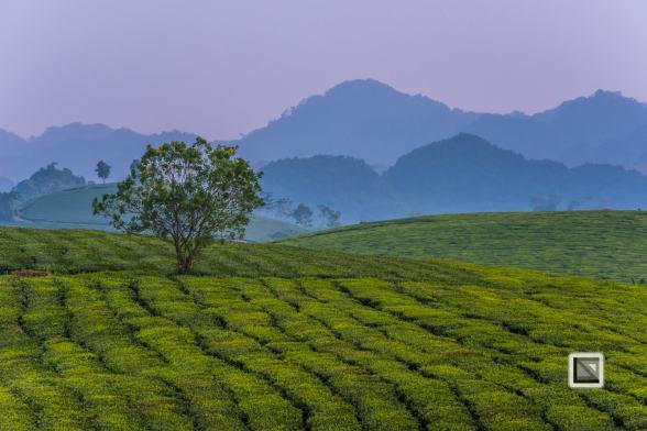 vietnam-moc_chau-son_la_province-43