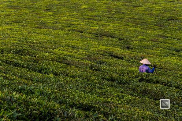 vietnam-moc_chau-son_la_province-75