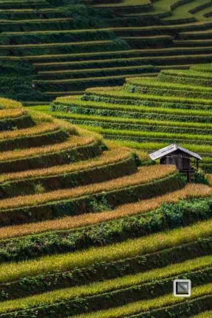 vietnam-mu_cang_chai-yen_bai_province_2-19-2