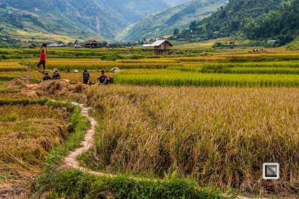 vietnam-van_chan-mu_cang_chai-yen_bai_province-158