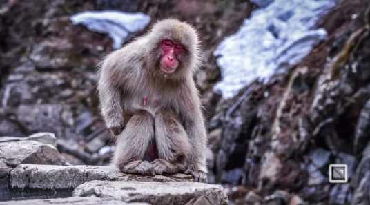 japan-jigokudani-snow_monkeys-68