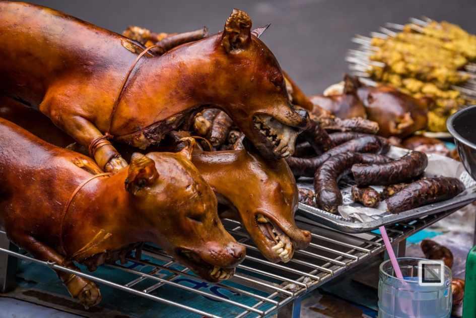 vietnam-hanoi-dog-7