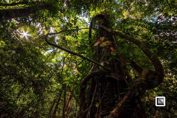 Malaysia-Sarawak-Mulu_Nationalpark2-85