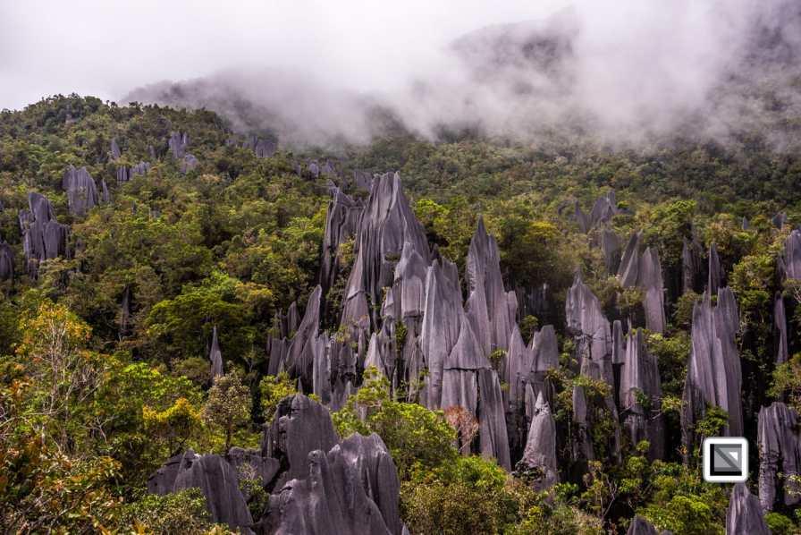 Malaysia-Sarawak-Mulu_Pinnacles-44