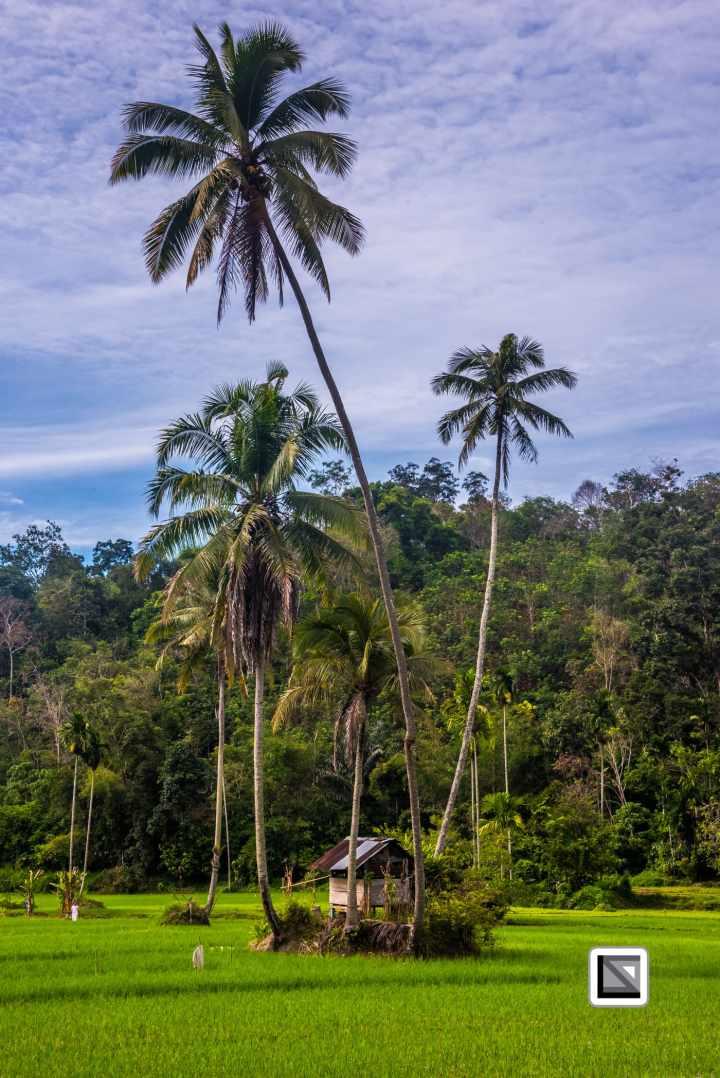 Indonesia-Sumatra-57