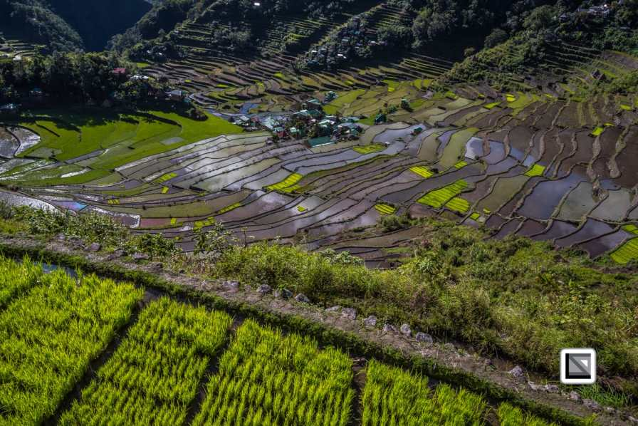 The Cordilleras - home of Luzon's most stunning rice erraces